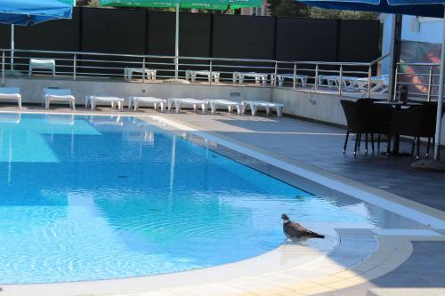 Der Swimmingpool an oder in der Nähe von Resort Zatišje