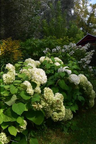 Сад в Гостевой Дом Колибри