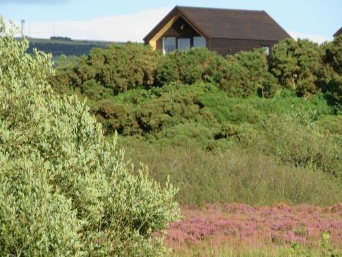 A garden outside Islandcorr Farm Luxury Glamping Lodges, Giant's Causeway
