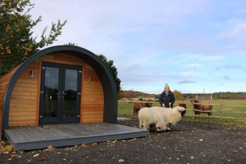 Glampods Glamping Pod - meet Highland Cows and Sheep Elgin