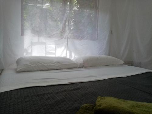 Ein Bett oder Betten in einem Zimmer der Unterkunft Bolita Rainforest Hostel and Cabinas