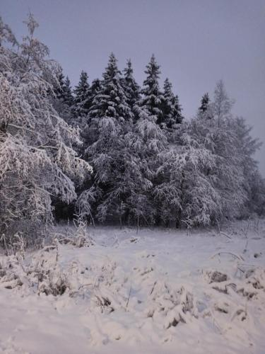 Lesnaya Skazka during the winter