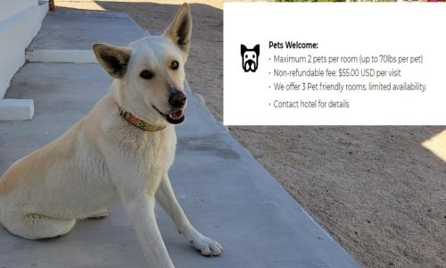 Pet or pets staying with guests at Pine Ridge Inn