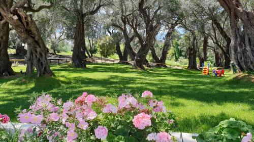 A garden outside Hotel Yannis Corfu