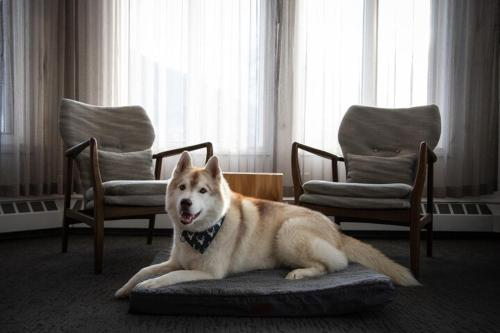 Pet or pets staying with guests at Elk + Avenue Hotel