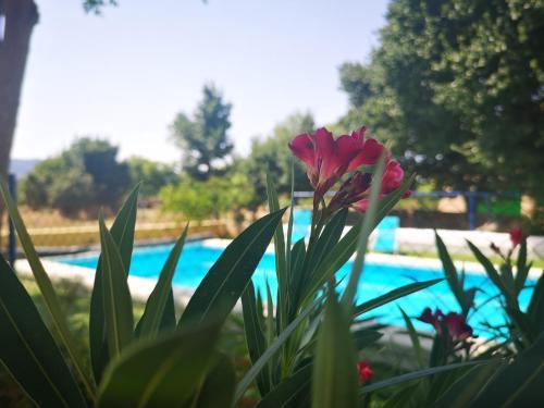 Piscina en o cerca de Casa Rural El Llano Quintanilla