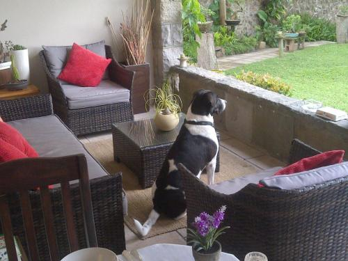 Pet or pets staying with guests at Red Tudor B&B