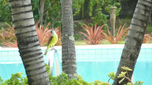 Animals at the vacation home or nearby