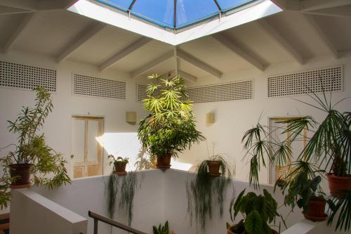 Lobby/Rezeption in der Unterkunft Hotel Horizontes de Montezuma