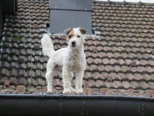 Pet or pets staying with guests at Wirtshaus Rutihof