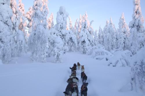 L'établissement Guesthouse Husky en hiver