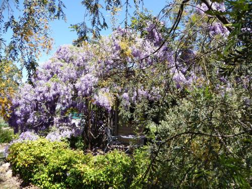 A garden outside Lakeside Lodge Armidale