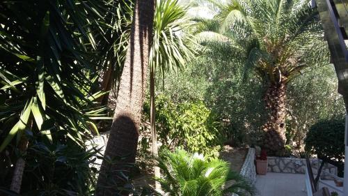 A garden outside Apartments Antoana