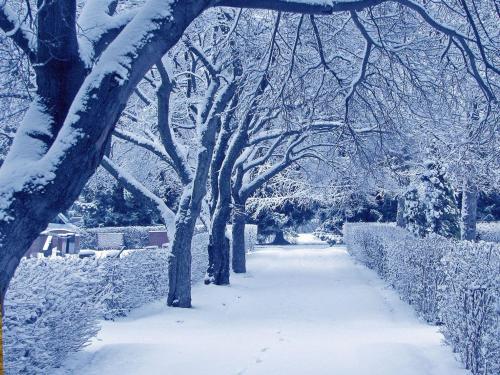 Saulesstari during the winter