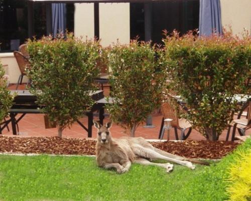 Pet or pets staying with guests at Alpha Hotel Canberra