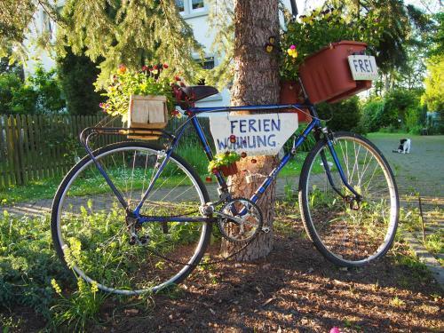 Radfahren an der Unterkunft Ferienwohnungen am Schwanenteich oder in der Nähe