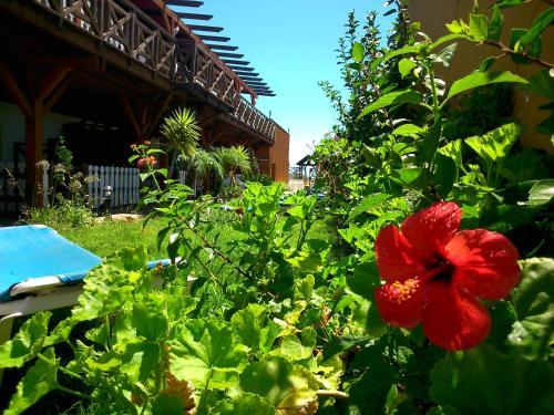 Jardín al aire libre en Hostal Playa Mazagon (El Remo)