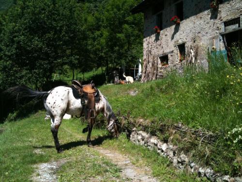 Attività di equitazione presso the country house o nelle vicinanze