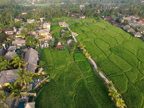 A bird's-eye view of Wapa di Ume Ubud