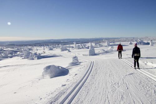 Sjusjøen Hytteutleie during the winter