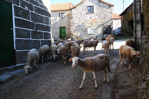 Animais in the country house ou nos arredores