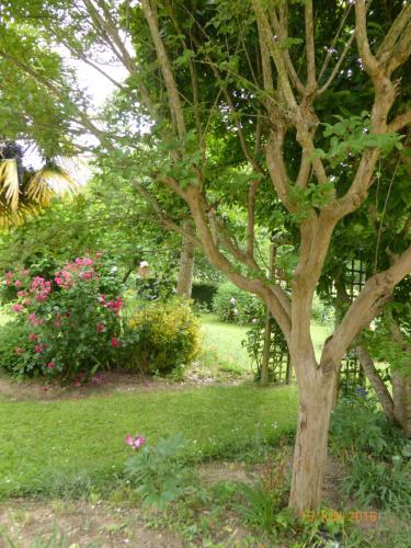 A garden outside Bedbreakfastbikespyrenees