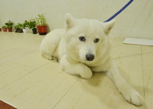 Pet or pets staying with guests at Yunshuiyao Hiaxi Sketching Homestay