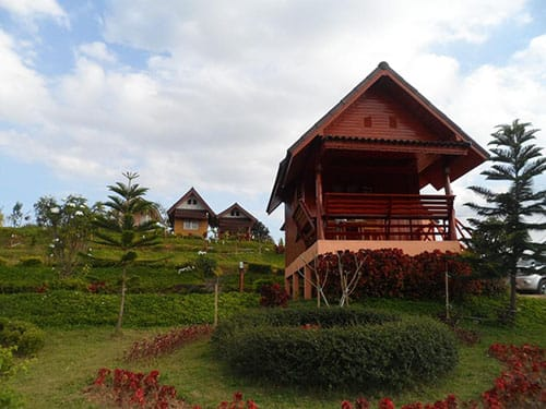 Khao Kho Flora Image