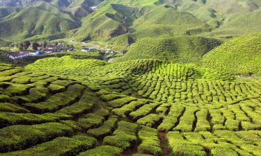 Apartments in Cameron Highlands