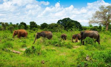 Penziony v Udawalawe