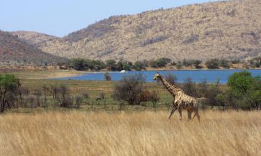 Family Hotels in Pilanesberg
