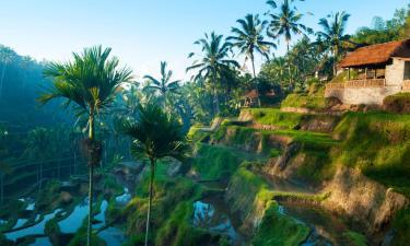 Villas in Ubud