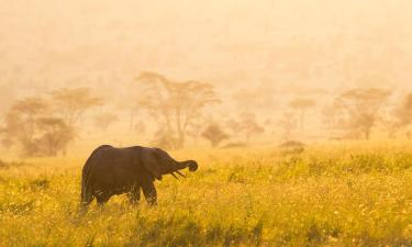 Hotels with Parking in Serengeti