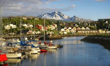 Pet-Friendly Hotels in Narvik