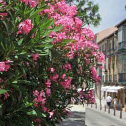 San Rafael 10 hoteles