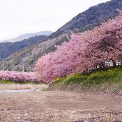 Kawazu 19 hotels