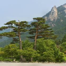 Sokcho 7 homestays