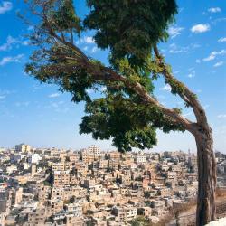 Amman 615 hotels