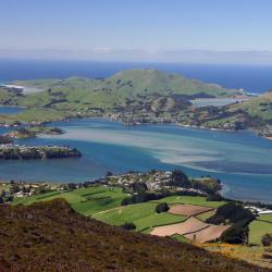 Dunedin 15 homestays