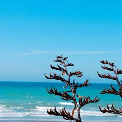Snells Beach 호텔 9개