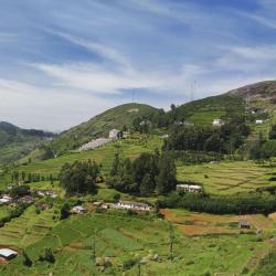 Ooty 9 self catering properties