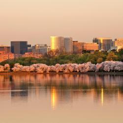 Arlington 123 hotels