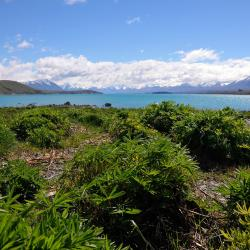Lake Tekapo 5 homestays
