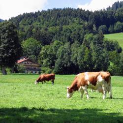 Lindenberg im Allgäu 13 hotels
