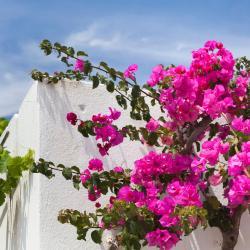 Azolimnos Syros 35 hotels
