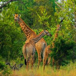 Makalali Game Reserve 3 lodges