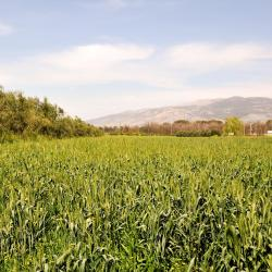 Beit Hillel 6 lodges