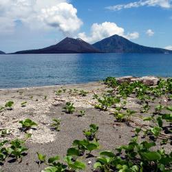 Tanjung Lesung 18 hotels
