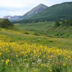 Crested Butte 109 hotels