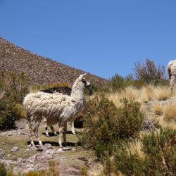 Cochabamba 151 hotels